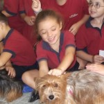 Children looking after the dogs.